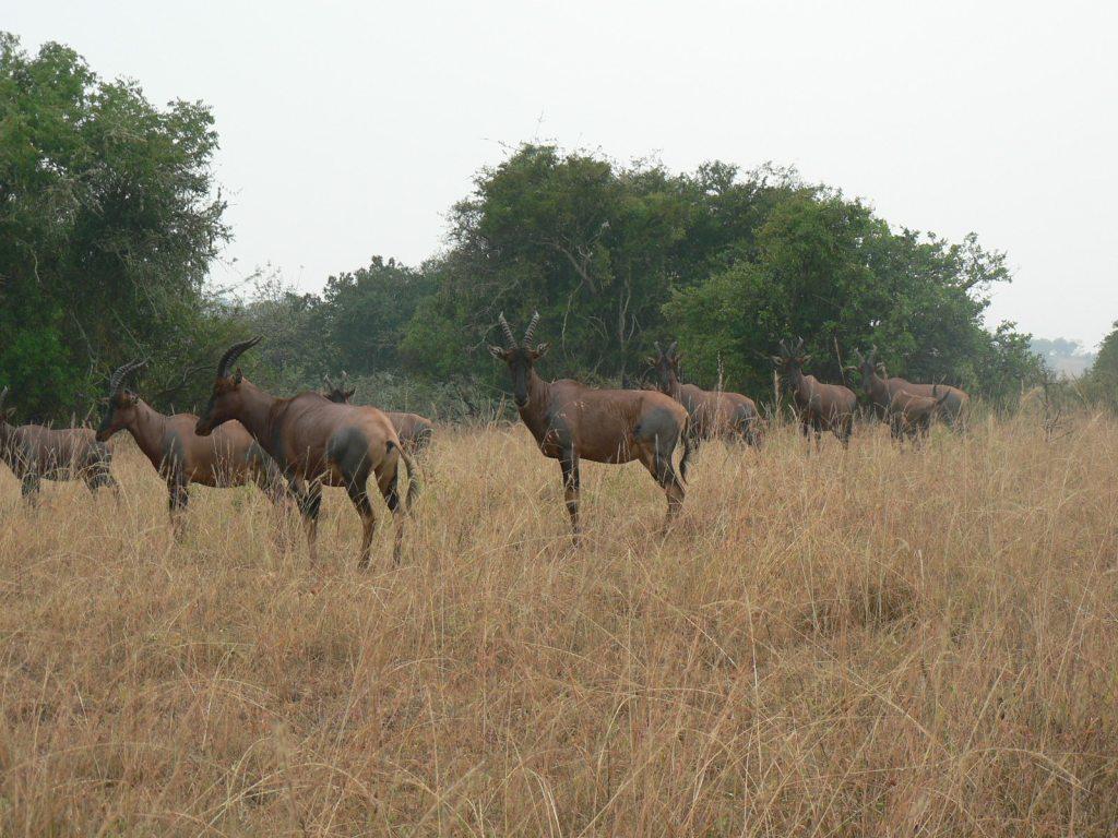 3 Days Akagera National Park Wildlife Safari