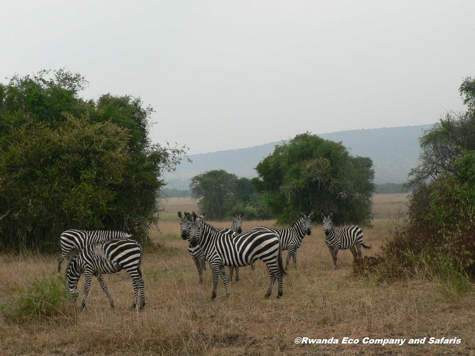 1 Day Lake Mburo National Park Tour