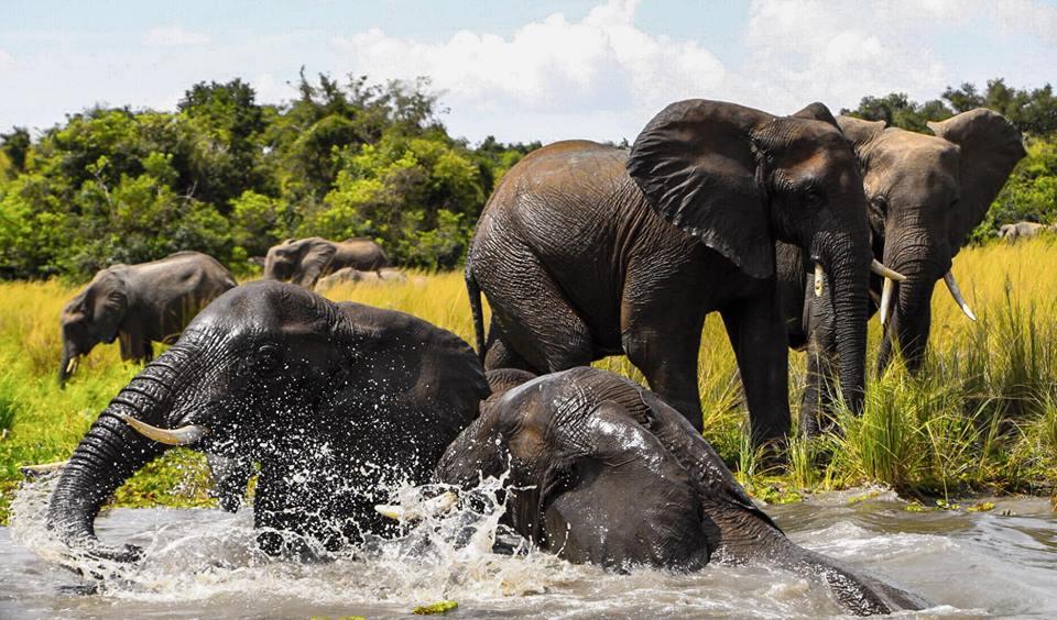 9 Days Extreme Wild Adventure Uganda Discovery