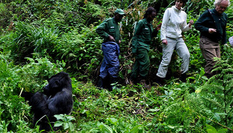 4 Days Gorilla and Chimp Tracking Safari in Uganda starting from Rwanda