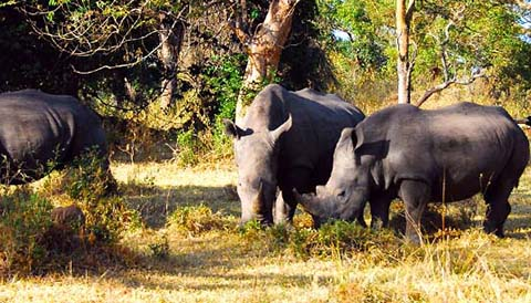 1 Day Rhino Tracking at Ziwa