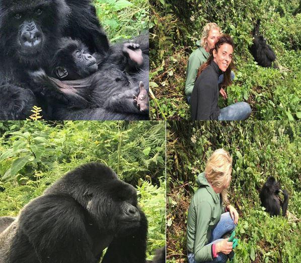 3 Days 2 Nights Rwanda Uganda Gorilla Trekking Safari