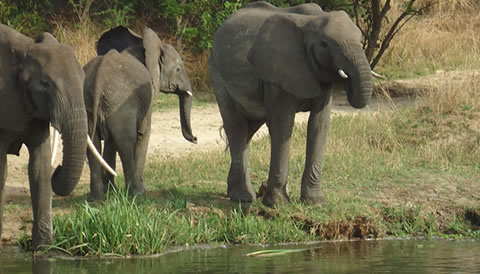 3 Day Wildlife Safari in Uganda