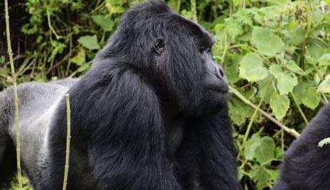 18 Days Rwanda Tanzania Safari