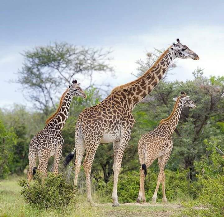 5 Nights 6 Days Kenya Wildlife Safari