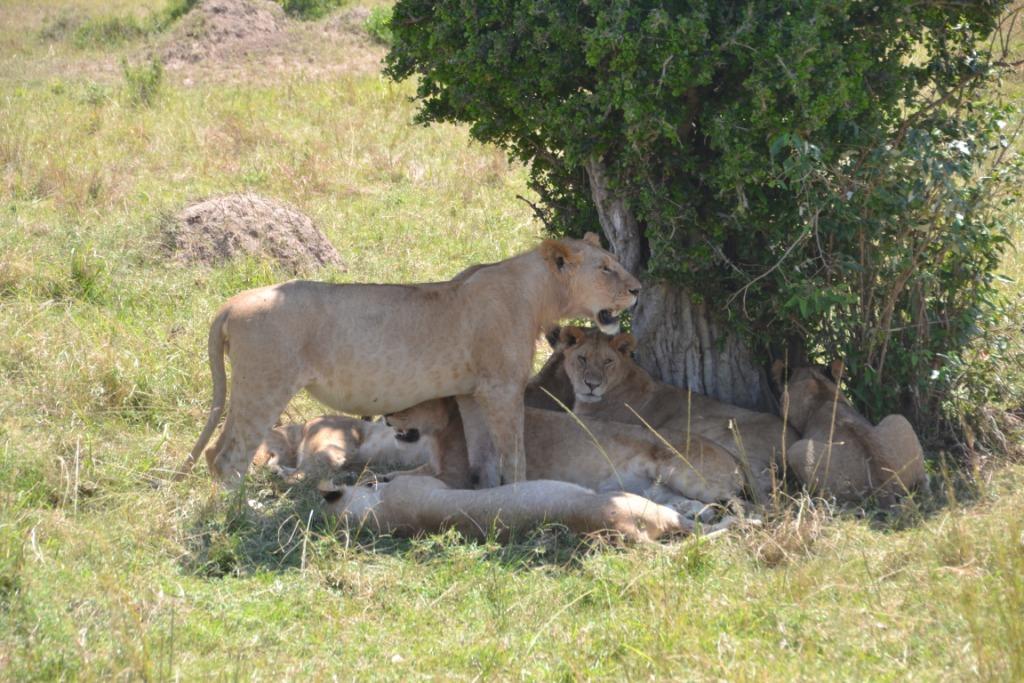 4 Nights 5 Days Northern Tanzania Wildlife Tour