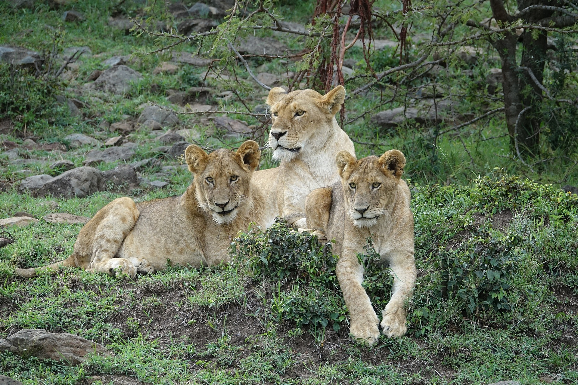 5 Days Northern Circuit Wildlife Encounter Safari
