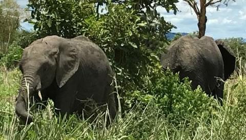 11 Nights 12 Days Best of Kenya and Tanzania Safari