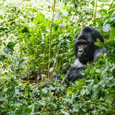 5 Days Queen Elizabeth and Gorilla Trekking Tour