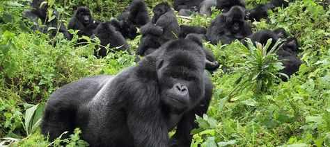 5 Days Gorilla Trekking and Lake Bunyonyi Tour
