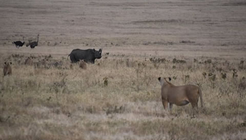 4 Days Kenya Wildlife Safari