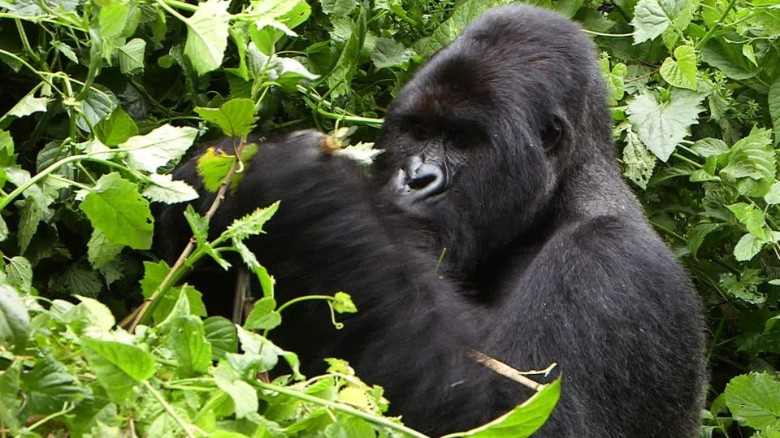 5 Days Gorilla Trekking Safari Starting From Kampala