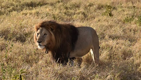 10 Days Northern Circuit Wildlife Safari Encounter