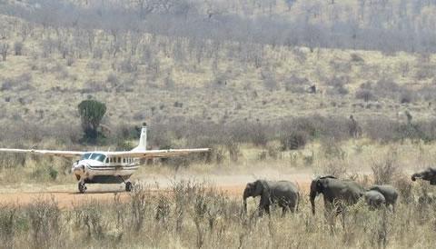 4 Days Fly in Ruaha National Park Safari