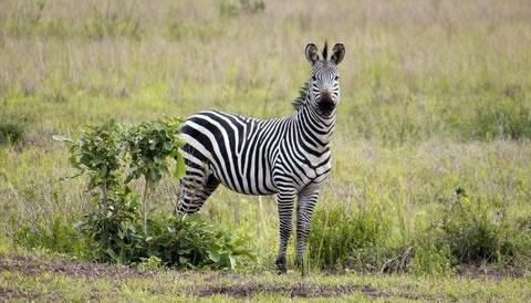 5 Nights 6 Days Ol Pejeta and Masai Mara Explorer Safari