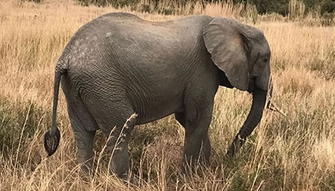 11 Days Rwanda and Tanzania Experiential Safari