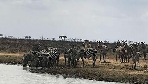 3 Days Flying Selous Game Reserve Safari