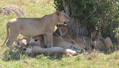 17 Days Uganda Tanzania Safari