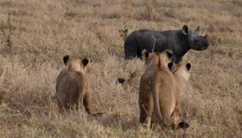 10 Days Northern Circuit Wildlife Encounter Safari
