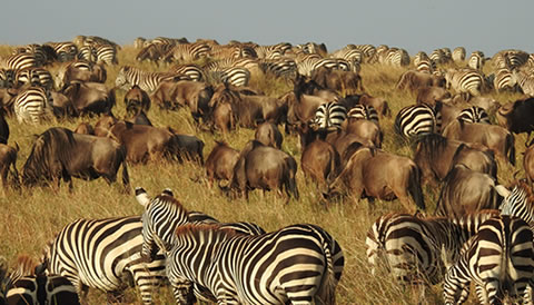 4 Nights 5 Days Kenya Wildlife Safari