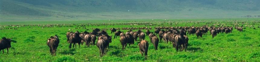 Northern Circuit Safaris